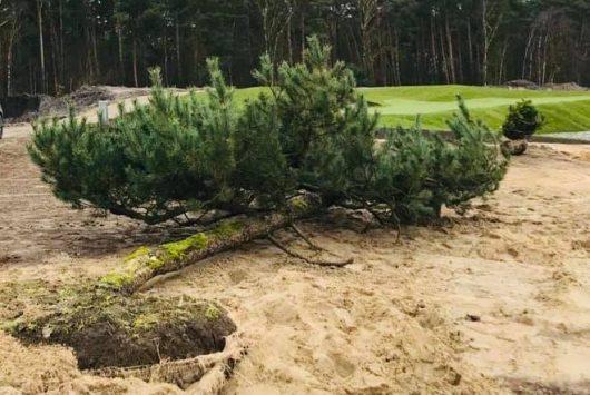 Baumpflege 2